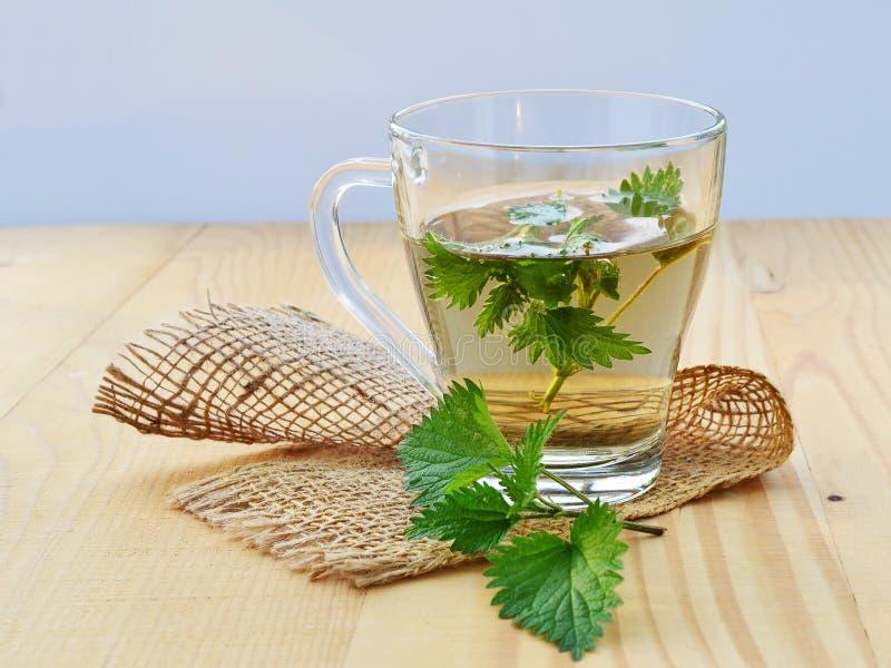 Nettle tea. Stinging nettle and fresh nettle tea in glass mug royalty free stock photography