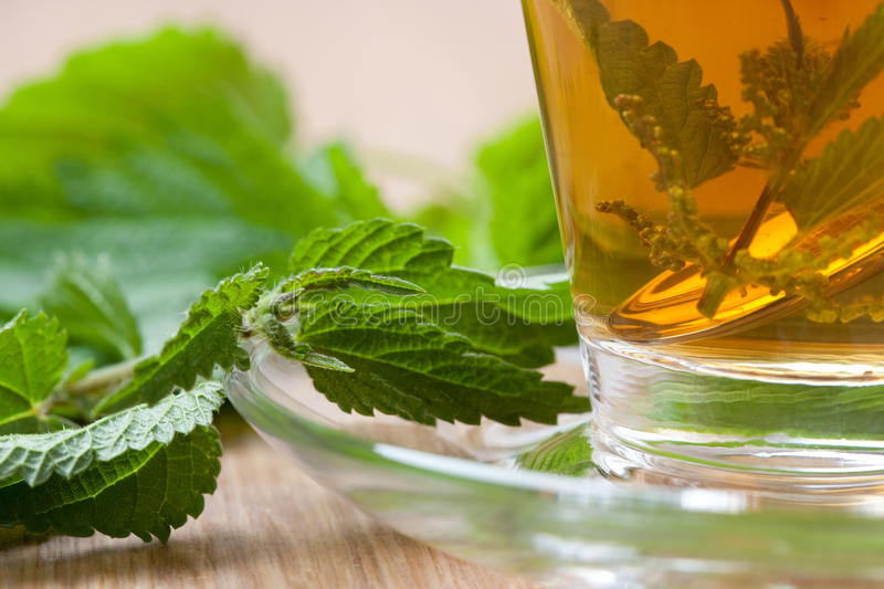 Nettle tea with stinging nettle inside teacup. Nettle tea, nettle blossoms and silver spoon inside teacup, stinging nettle leaves around, closeup, on wooden royalty free stock image