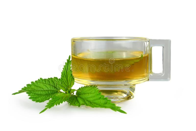 Nettle tea in transparent cup isolated on white. Background royalty free stock images