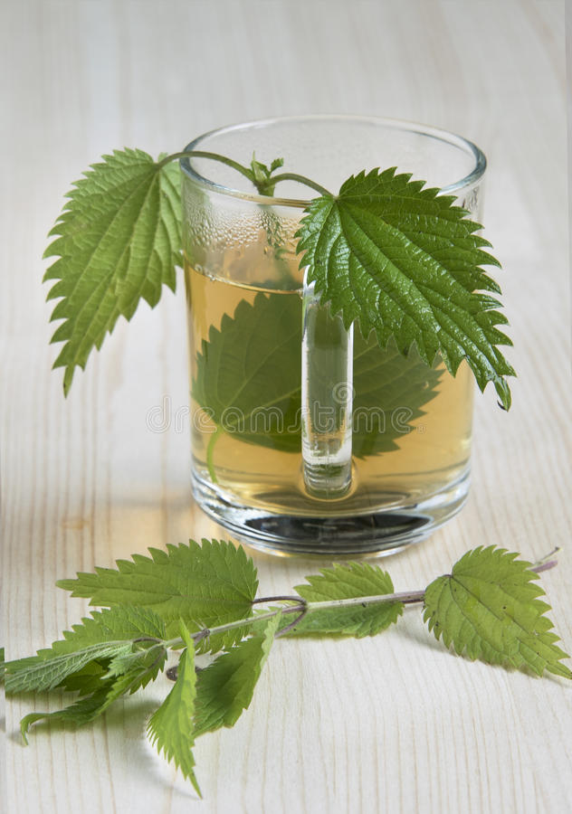 Nettle tea. On the wood background leaves in the cup royalty free stock images