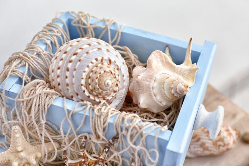 Netto en zeeschelpen in lade, close-up royalty-vrije stock foto