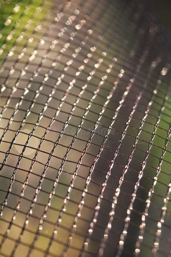 Netto modell under solljus f?r tapet eller bakgrund arkivfoton
