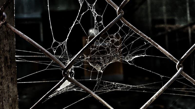 Netto Spidernet stock fotografie