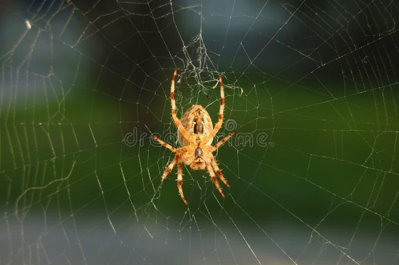 netto spindelrengöringsduk royaltyfria bilder