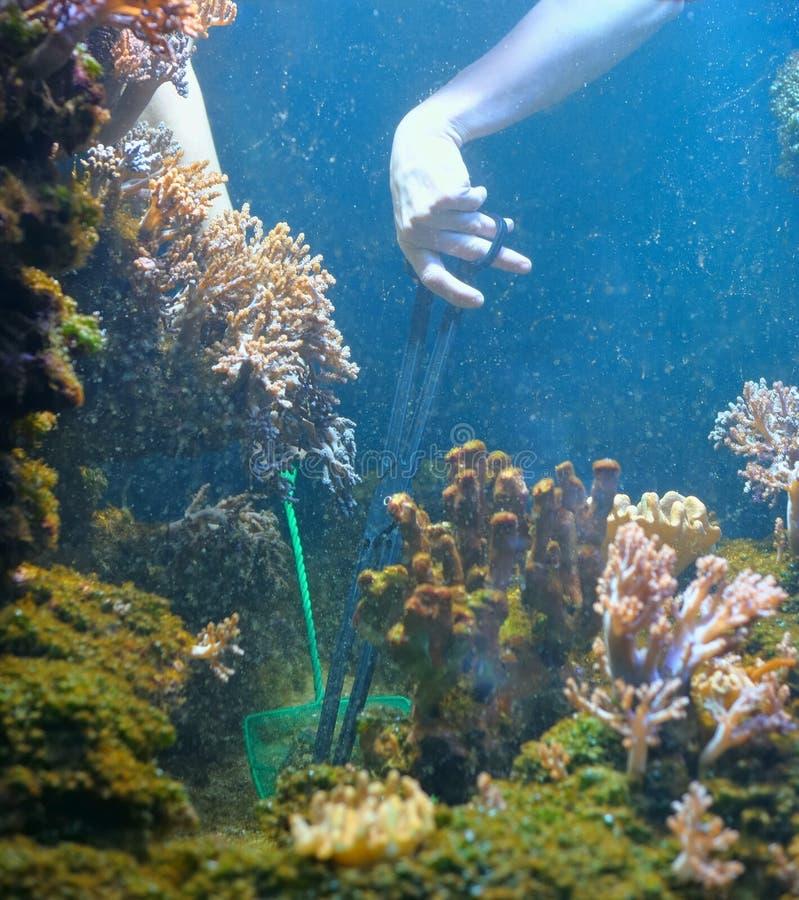 Nettoyage d'aquarium photo libre de droits