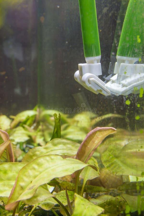 Nettoyage du verre dans l'aquarium de la plaque d'algues vertes images libres de droits