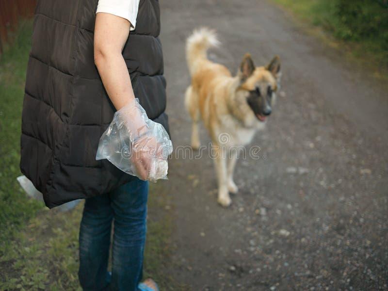 Nettoyage Poo après chien image stock