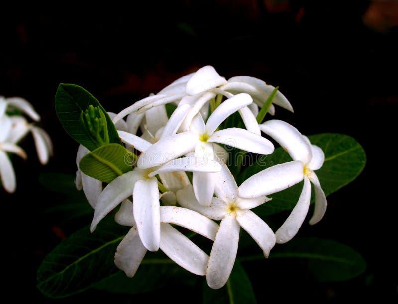 Nettoyez la fleur 1 photographie stock libre de droits