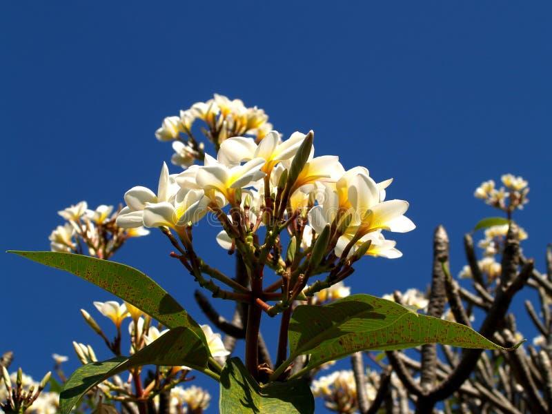 Nettoyez la fleur photographie stock libre de droits