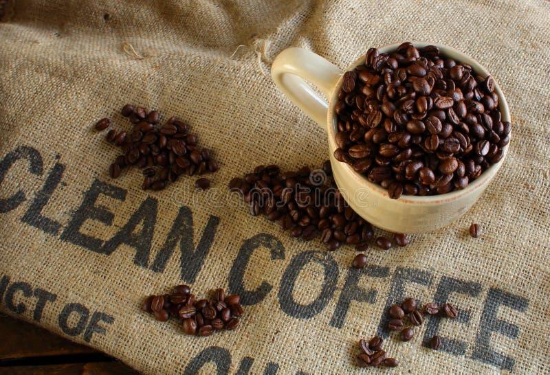 Nettoyez les grains de café organiques photos libres de droits