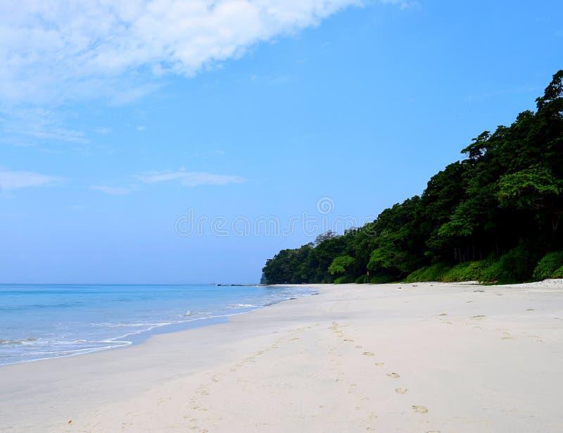 Nettoyez Sandy Beach blanc et les plantes vertes côtières - plage de Radhanagar, île de Havelock, Andaman et îles de Nicobar, Ind photos stock