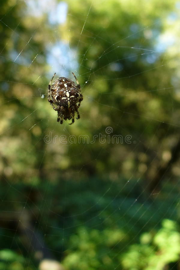 Network. Spider pletet network at track in the Park fishing royalty free stock image