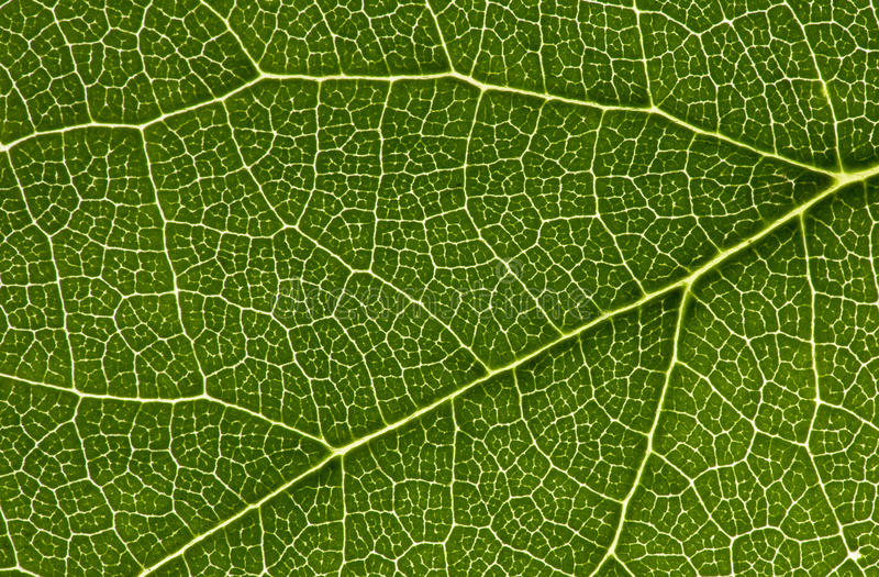 Network in a leaf stock photos