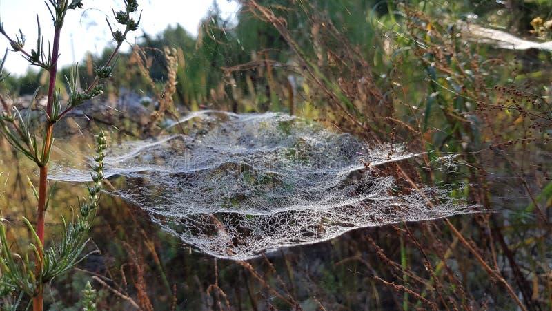 Netz auf dem Gras morgens stockbild