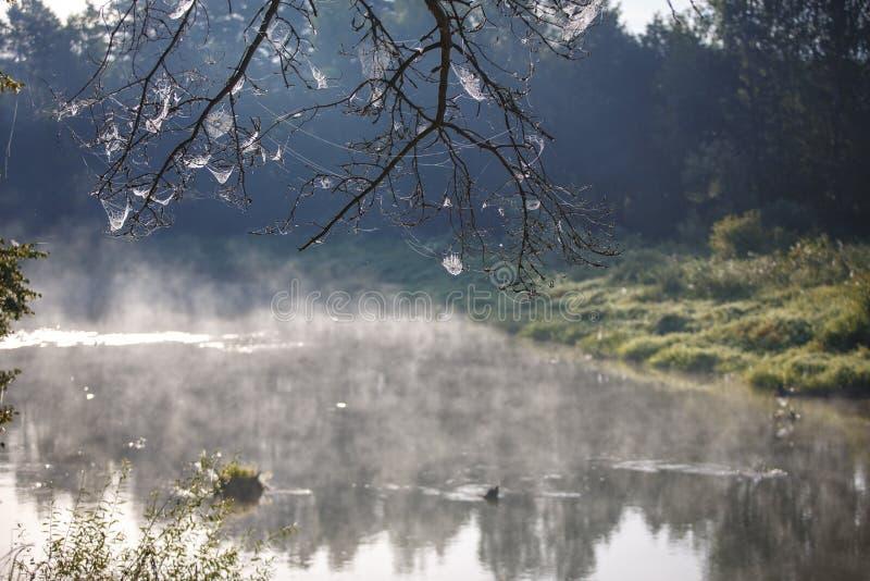 Netz auf den Niederlassungen von den Bäumen ausgedehnt stockfotografie