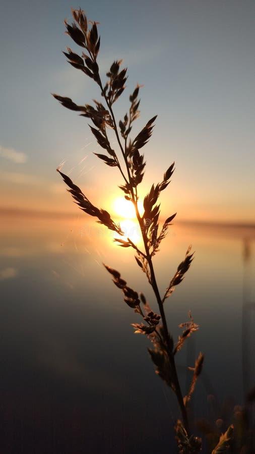 Netz im Weizen lizenzfreie stockfotos
