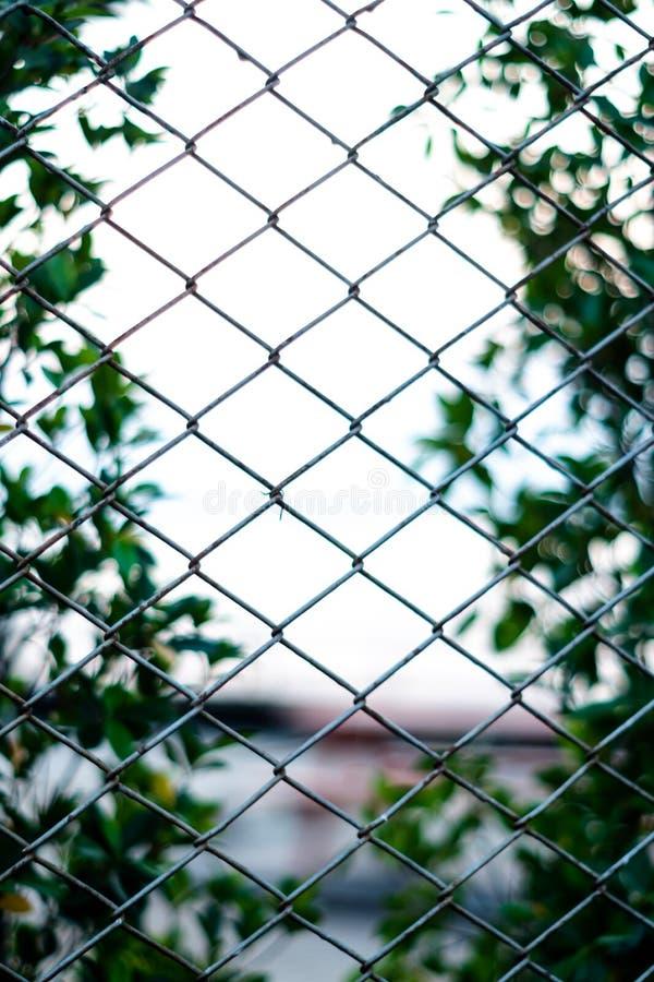 Netz- und Gartenhintergrundunschärfe und stockfotografie