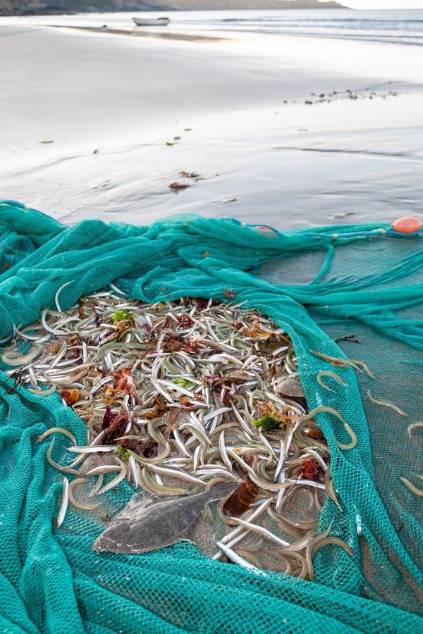 Netz voll von Fischen auf Strand lizenzfreie stockbilder