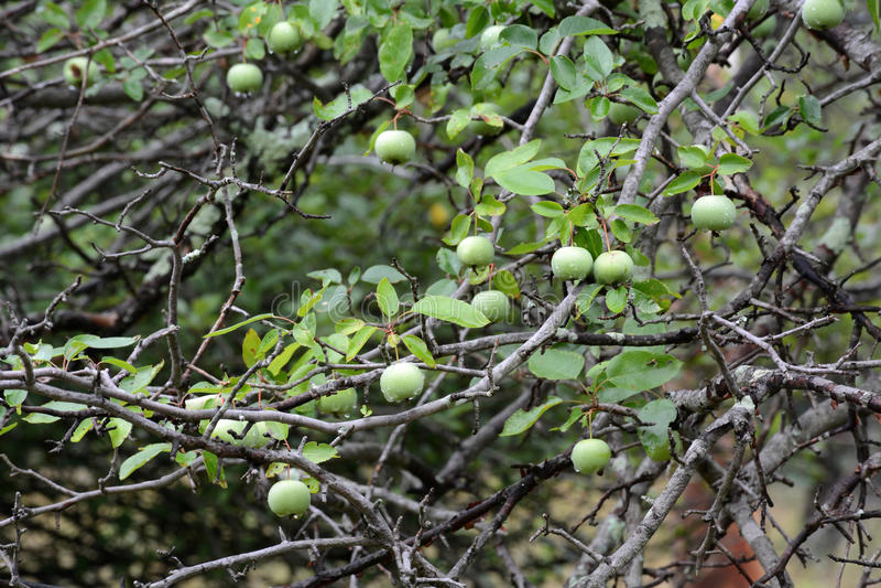 Neue Äpfel lizenzfreie stockbilder