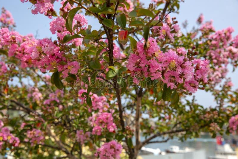 Neue blühende Blumen-im Frühjahr Baumaste stockfotografie
