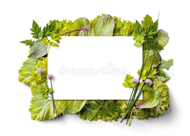 Neue Grüns im Rahmen stockfoto