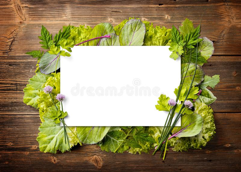 Neue Grüns im Rahmen stockfotos