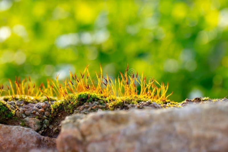 Neue junge Grassprösslinge stockfotografie