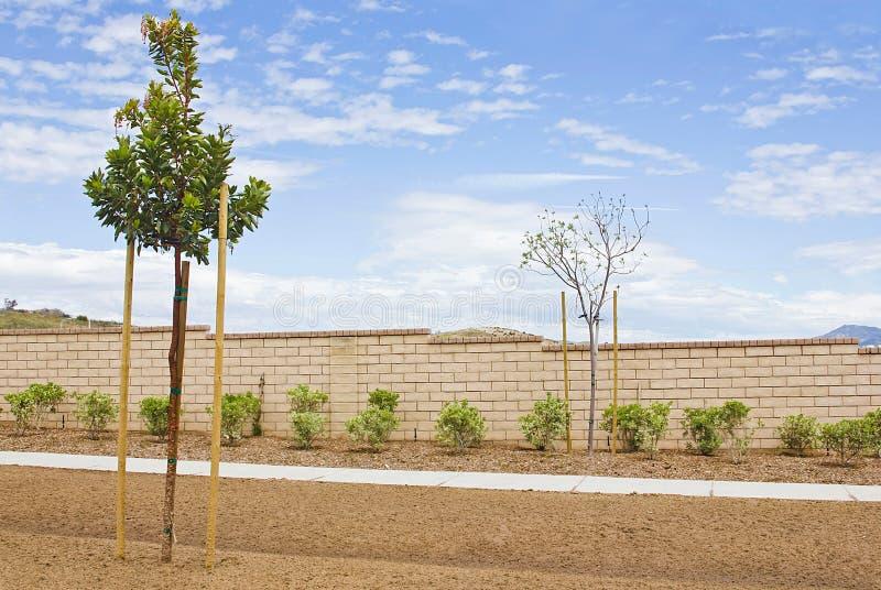 Neue Nachbarschafts-Bäume stockfotografie