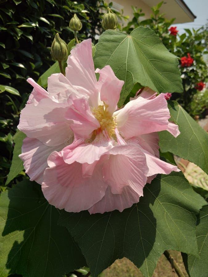 Neue Natur des schönen Blumengrüns stockfotos