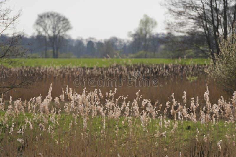 Neue Natur im Achterhoek stockfotografie