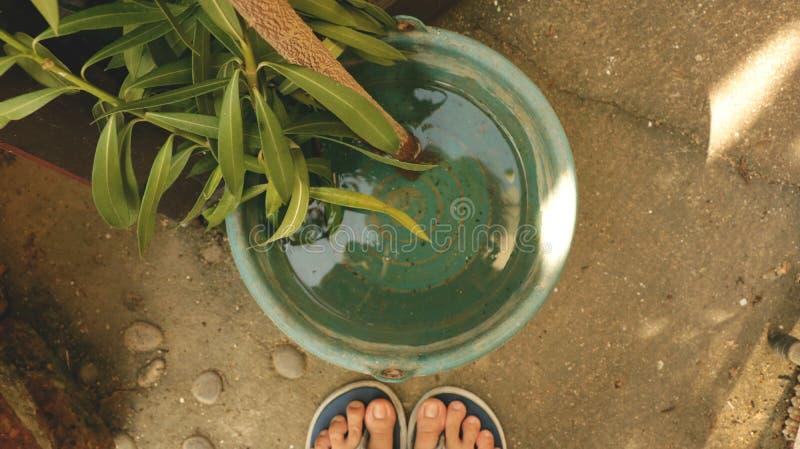 Neue Niederlassung mit langen Blättern in der Weinlese-Grün-Plastikschüssel Wasser lizenzfreies stockfoto