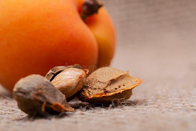 Neue organische Aprikosen und Aprikosenkerne der Samen einer Aprikose, nannten häufig einen 'Stein 'auf natürlichem Leinwandhinte lizenzfreies stockfoto