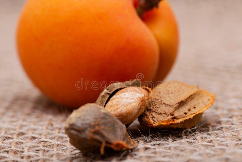 Neue organische Aprikosen und Aprikosenkerne der Samen einer Aprikose, nannten häufig einen 'Stein 'auf natürlichem Leinwandhinte stockbild