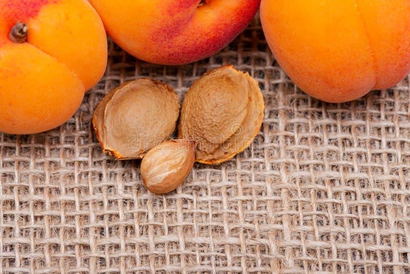 Neue organische Aprikosen und Aprikosenkerne der Samen einer Aprikose, nannten häufig einen 'Stein 'auf natürlichem Leinwandhinte stockfotos