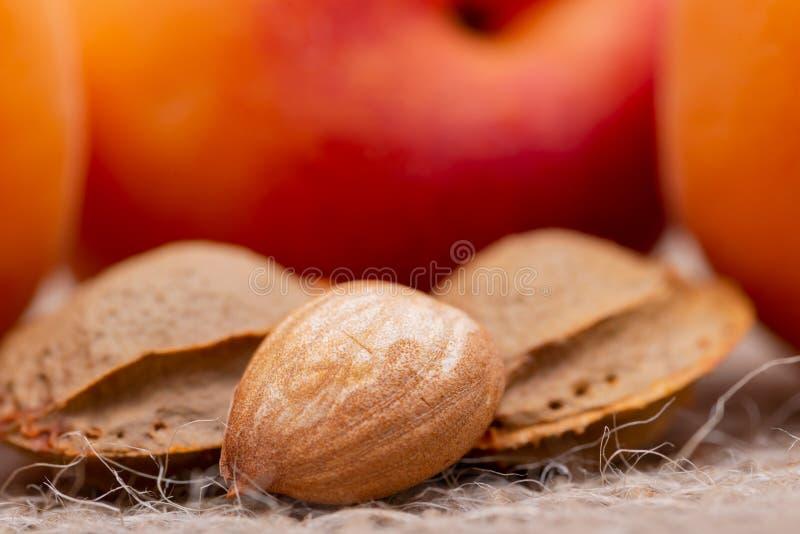 Neue organische Aprikosen und Aprikosenkerne der Samen einer Aprikose, nannten häufig einen 'Stein 'auf natürlichem Leinwandhinte lizenzfreie stockfotos