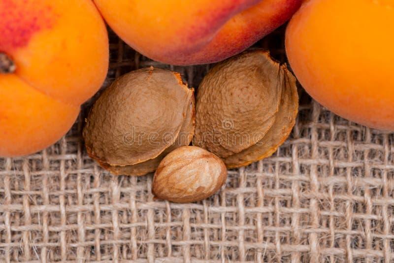 Neue organische Aprikosen und Aprikosenkerne der Samen einer Aprikose, nannten häufig einen 'Stein 'auf natürlichem Leinwandhinte stockfoto