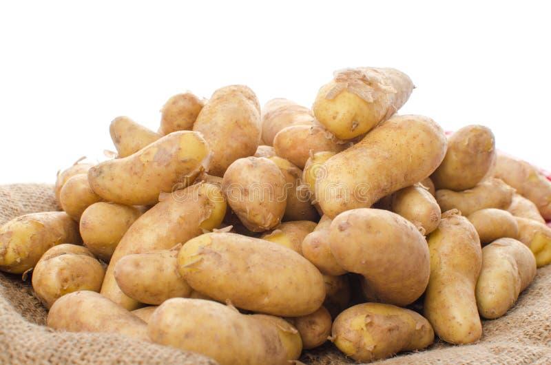 Neue rattes Kartoffeln auf Leinwand lizenzfreies stockfoto