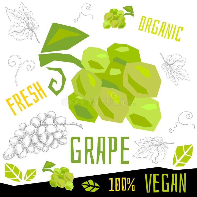 Neue reife Vektor-Handgezogene Illustrationen des strengen Vegetariers der Traubentraubenfrüchte organische Nahrungsmittel stock abbildung