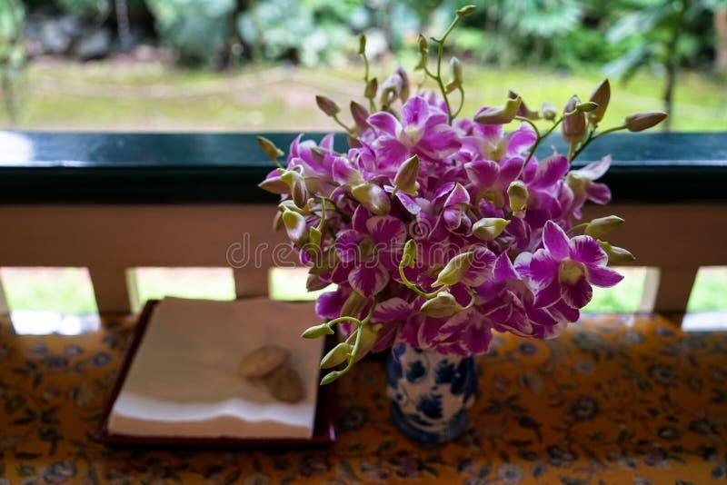 Neue zweifarbige Farbe-, Purpurrote und weiße, Knospungs- und Blühenorchideenblumenanordnung im keramischen Vase lizenzfreie stockfotos