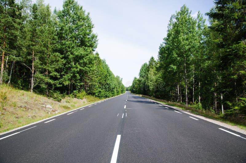 Neuer Asphalt und Linien an einer geraden Straße im Wald lizenzfreie stockbilder