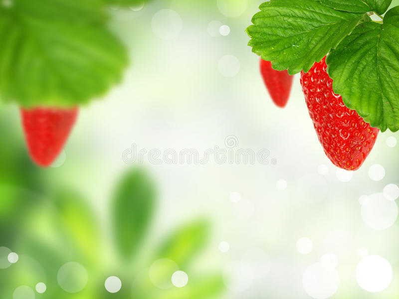 Neuer Erdbeerehintergrund lizenzfreies stockbild