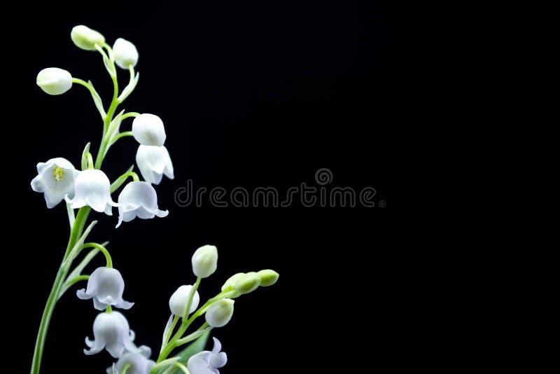 Neuer Frühling blüht Maiglöckchen auf einem schwarzen Hintergrund lizenzfreies stockbild