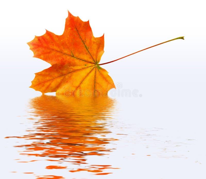 Neuer Herbst stockbilder