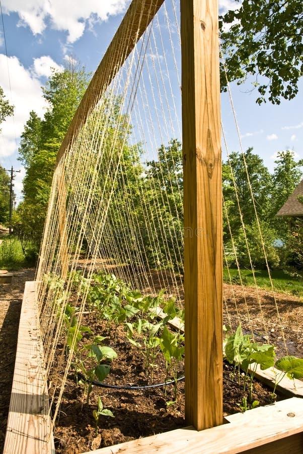 Neuer organischer Garten lizenzfreie stockbilder