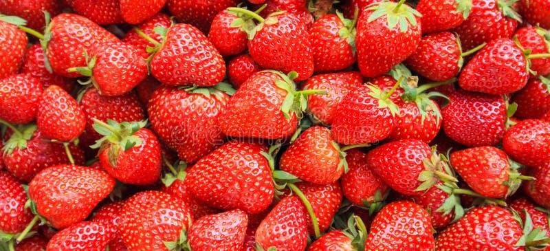 Neuer organischer roter reifer Erdbeerfruchthintergrund stockbild