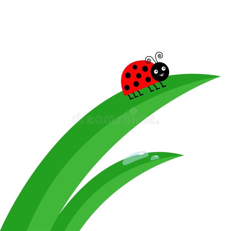 Neuer Stielabschluß des grünen Grases oben Wasser-Tropfen-Satz Marienkäfermarienkäferinsekt Morgentropfensatz Netter Karikaturbab stock abbildung