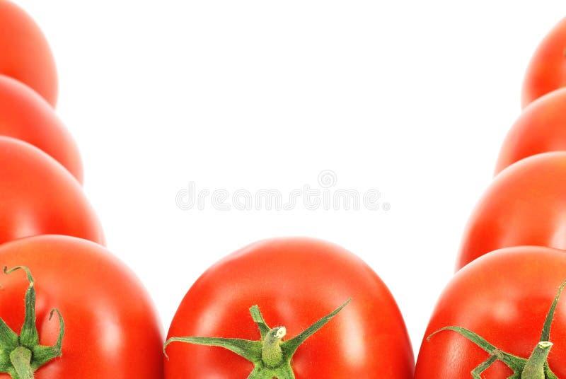Neuer Tomaterand lizenzfreies stockfoto