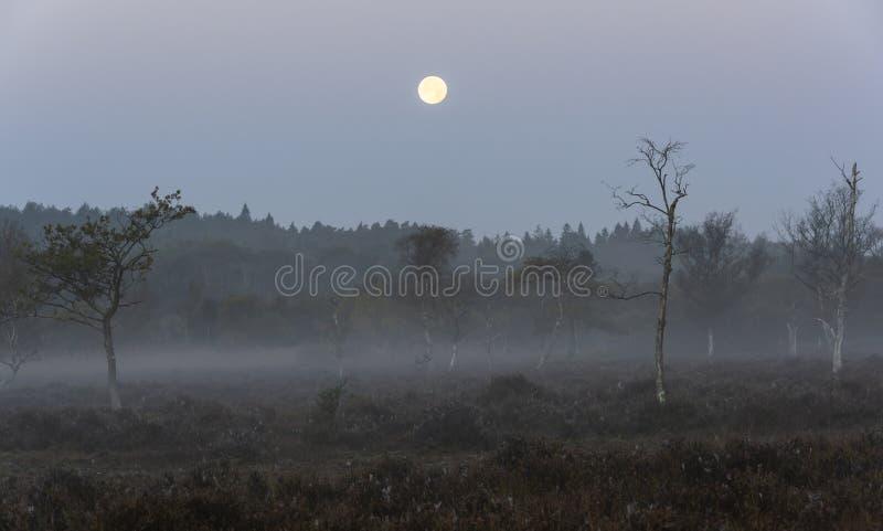 Neuer Wald mit Vollmond stockfotos