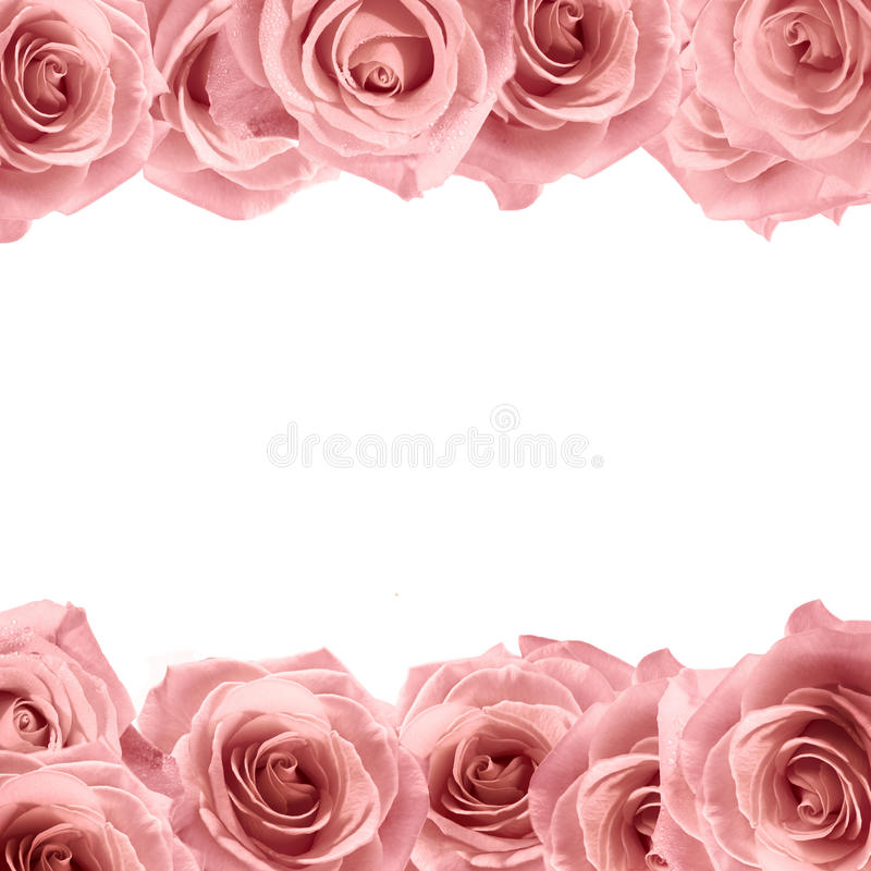 Neuer weicher Rosarosenrahmen auf weißem Hintergrund Universalschablone für Grußkarte, Webseite, Hintergrund stockfoto