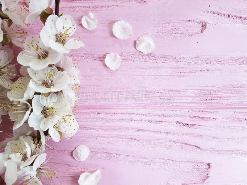 Neuer Weinlesefrühling der Kirschblüten-Niederlassung auf einem rosa hölzernen Hintergrund lizenzfreie stockfotografie